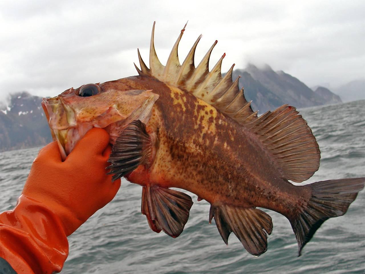 Alaska Rock Fishing - Alaskan Escape, Thorne Bay AK