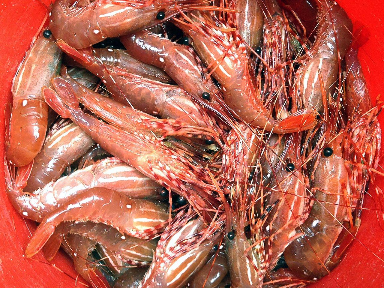 Fresh Shrimp at Alaskan Escape, Thorne Bay Alaska!